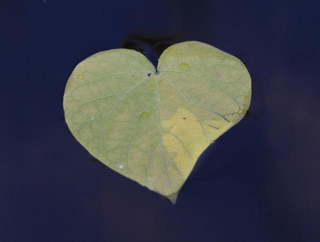 leaf-heart-yellow-1-4590351